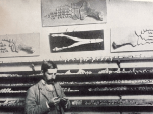 Alfred with part of his collection in the 'large bone room', May 1890. Image courtesy of the Leeds Family.